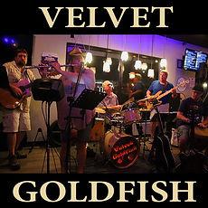 Velvet Goldfish.jpg