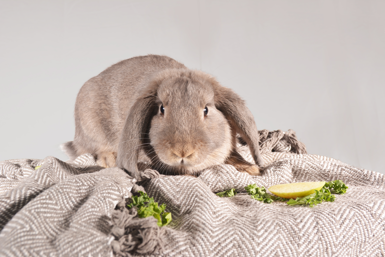bunny 2