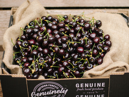 SWEET, JUICY SOUTHERN FORESTS CHERRIES BACK ON TRACK FOR FESTIVE SEASON