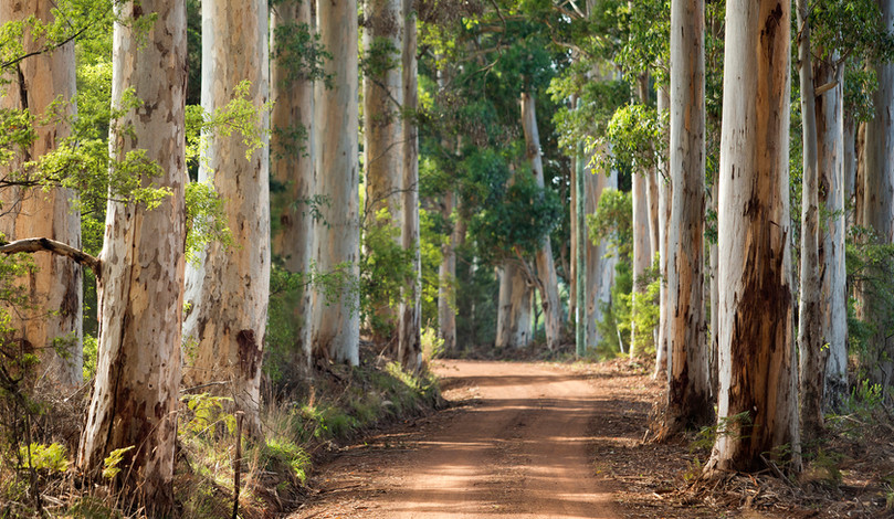 Genuinely Extraordinary - Southern Forests