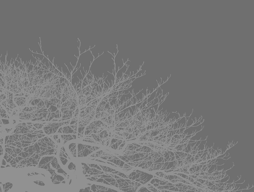 HI_1_Web.jpg