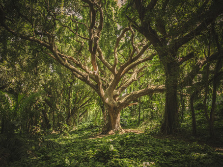 What is a Carbon Offset?