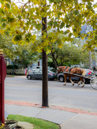 Horse & Carriage Rides from our Front Porch