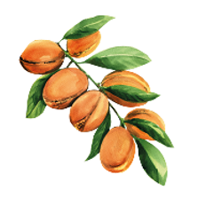 Argan-Tree-removebg-preview (1).png