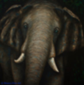 elephant, asian elephant, painting, ivory, tusks, palette knife painting, fine art, Jessica Bianco artist, sustainable art