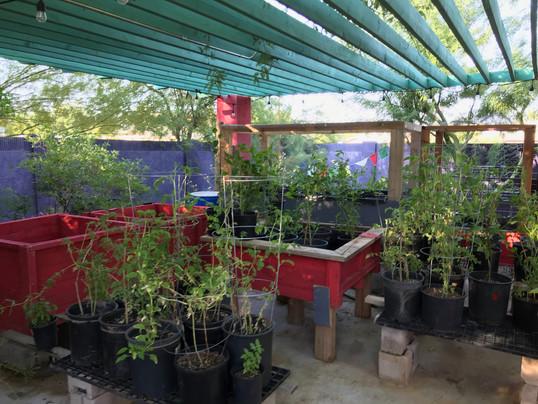Plant Nursery 2 2019 Buena Luna.jpeg