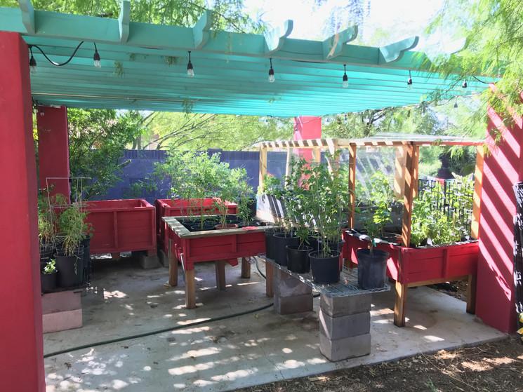 Plant Nursery area 2019 Buena Luna.jpeg