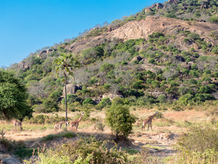 Have you heard of Ruaha National Park?