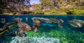 Em gravações para novo livro, fotógrafo da natureza Hudson Garcia destaca belezas do Rio Sucuri