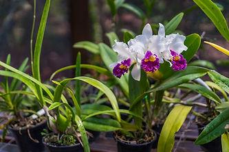 Orquidário Beija Flor