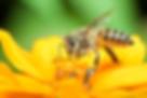 Apiário Beija Flor em Bonito MS