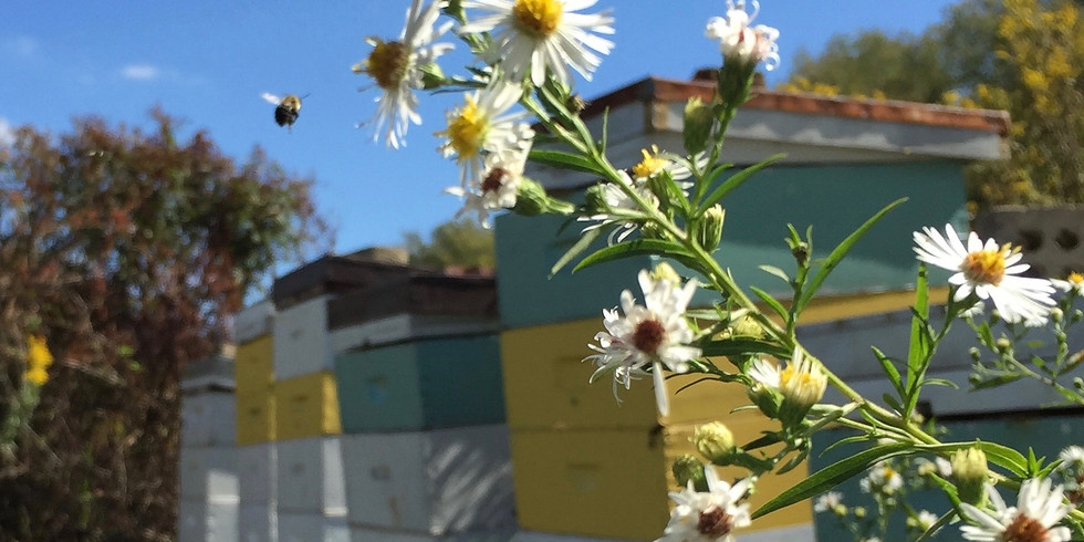 Aveda's Support the Honeybees