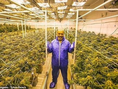 Mike Tyson's POT Empire To Include A 420-Acre Marijuana Vacation Resort