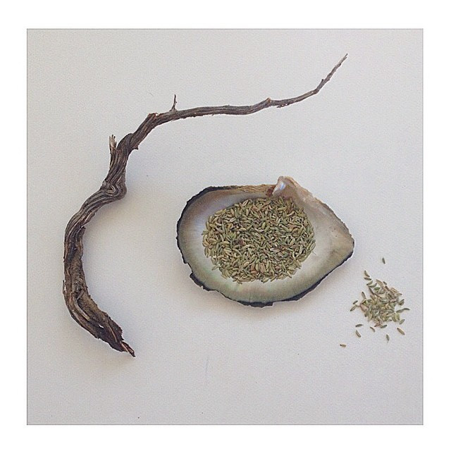 Instagram - FENNEL SEEDS are one of India's favorite herbs for digestion.jpg
