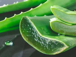 Aloe Vera - proprietà
