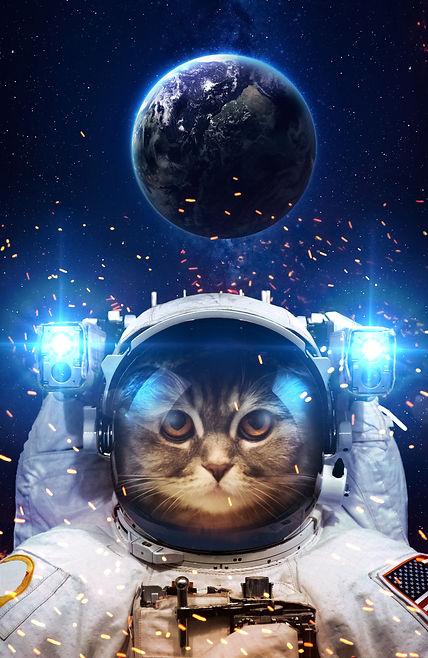 cat astronaut.jpg