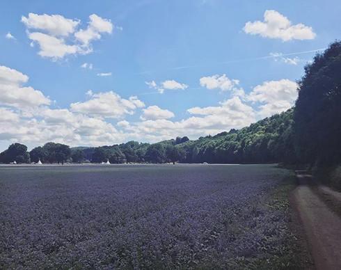 Pretty Borage Fields