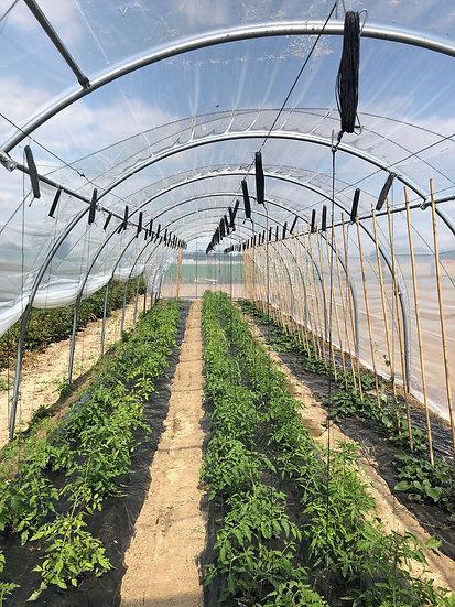 """Plein champs """"Magnum"""" spécial  cultures tomates sur ficelles larg. X 4.50m"""