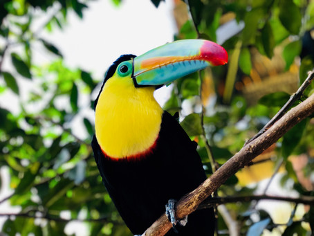 Week 8 – Days 50-56 – Exotic birds in Costa Rica, the Panama Canal and Marathons 24 and 25 in Colomb