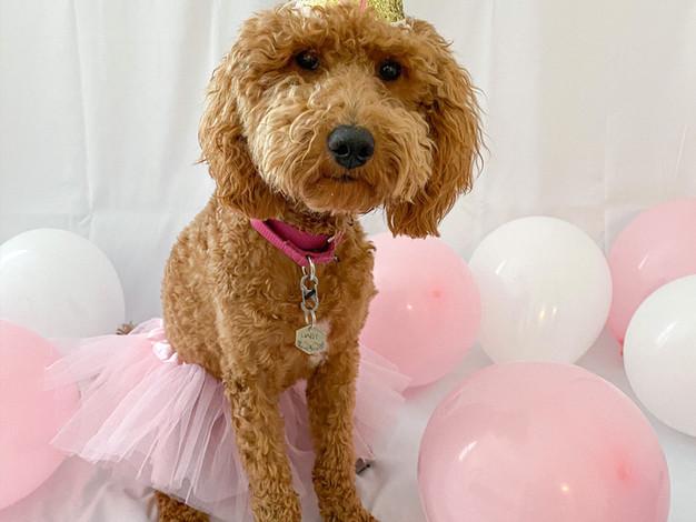 Daisy Birthday.jpeg