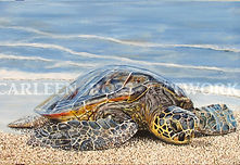 Turtle Untitled blog2.jpg