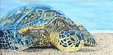 Sea Turtle WEB2-1.jpg