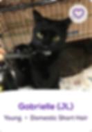 Screen Shot 2020-01-09 at 11.15.56 AM.pn