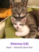 Screen Shot 2019-06-17 at 9.49.18 AM.png