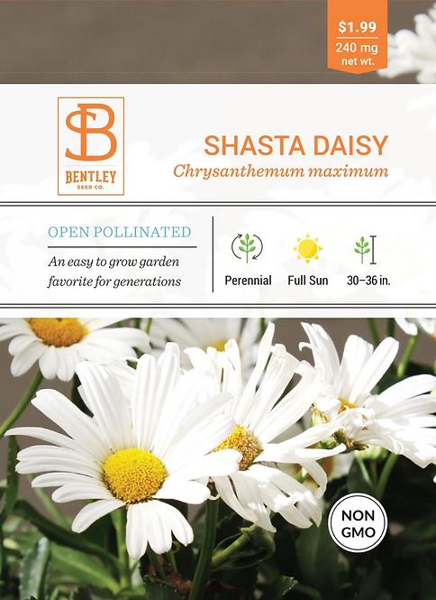 Shasta Daisy - Seed Packet