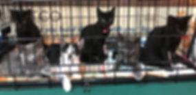 Kittens1 (2).jpg