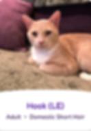 Screen Shot 2019-09-03 at 3.18.20 PM.png