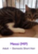 Screen Shot 2019-05-09 at 7.51.10 PM.png