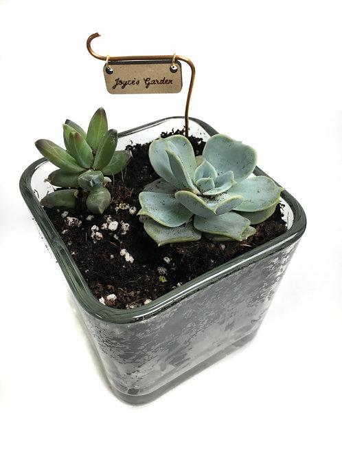 Drop Off Craft: DIY Mini Terrarium