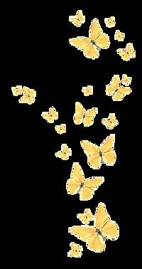butterflies-reversed.png