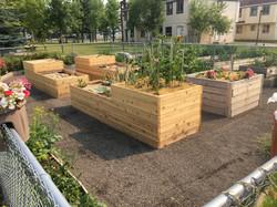 MRU community garden