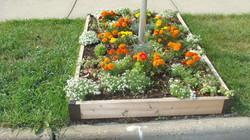 Front curb garden