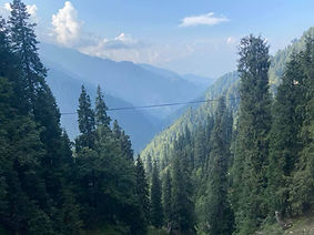 Forest view of Kashmir