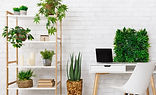 Green Plants in a white background office.
