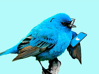 A blue little bird using a mobile phone with twitter on it