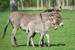 Donkey-3000.jpg