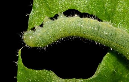 Plant Acoustics: or how the plant kingdom got vibey