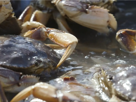 VIDEO - San Francisco's Crab Fishermen struggle to recover after challenging year.