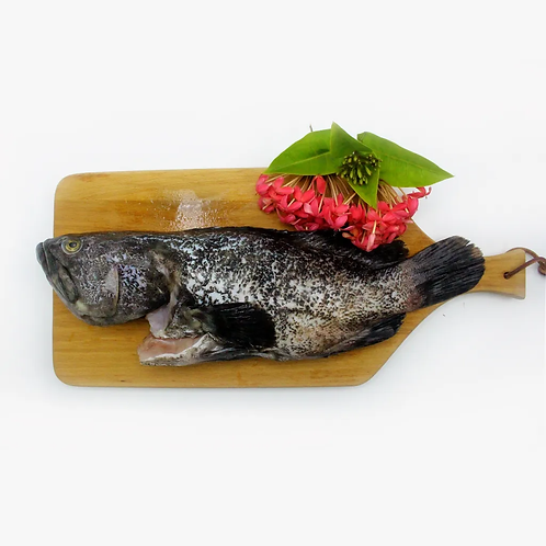 Cá mú trân châu đông lạnh bỏ vảy, nội tạng ,mang cá (600 gram) - Hiệp hội ngư dâ