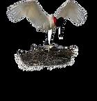 pousada eliana logo 1.png