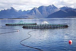 salmon safari.jpg