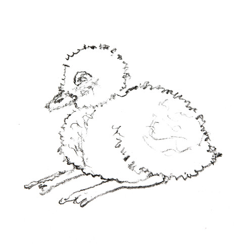 Duckling One