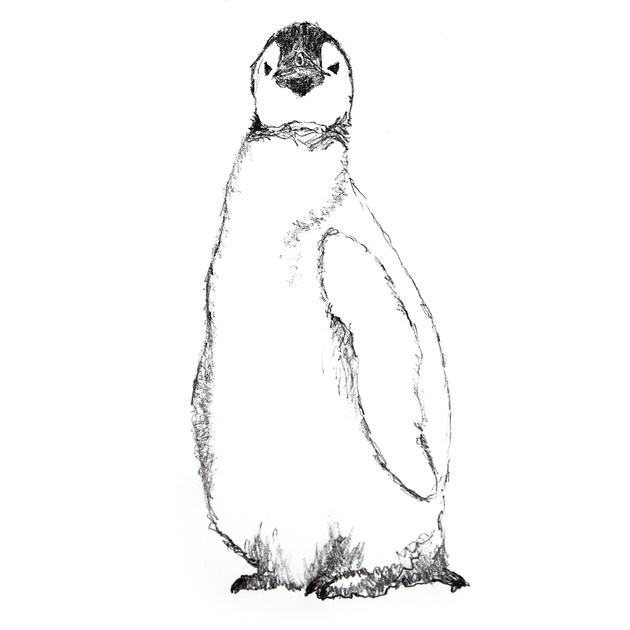 Tall Baby Penguin