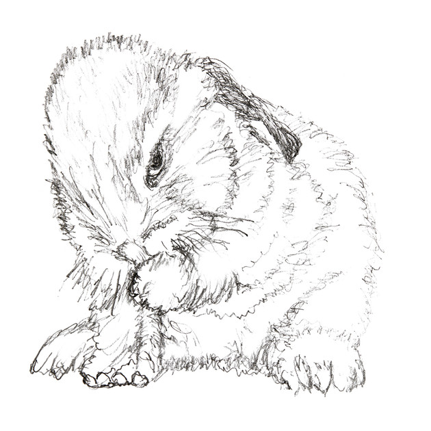 Bunny Two