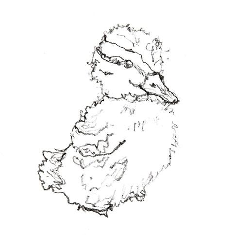 Duckling Three