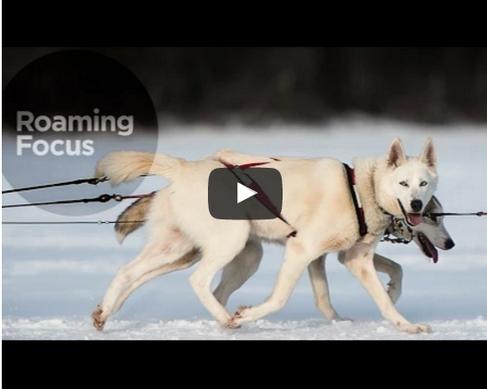 Ep. 6 - Dog Sledding